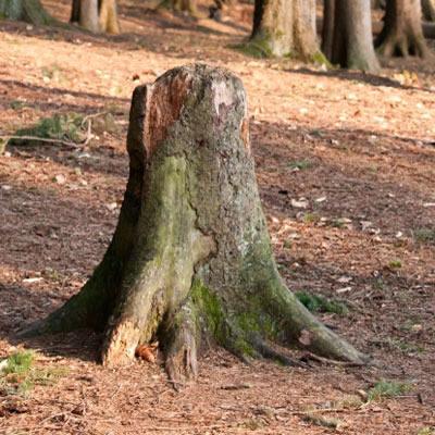 short term hire stump props