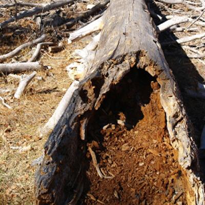 short term hire stump
