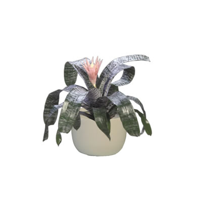 bromeliad in white mini garden bowl