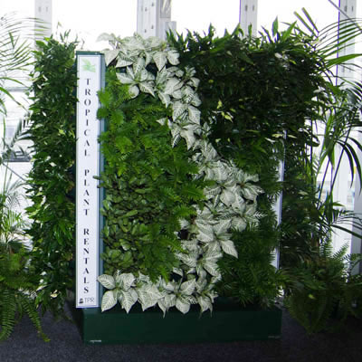 green wall with signage