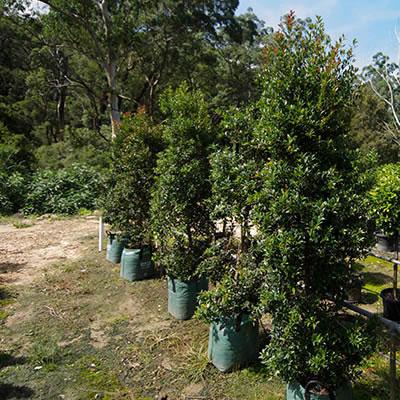 trees plant hire