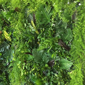 casual-nz-primeminister-dinner-sandy-grice-green-wall-foliage-wall-6-400x4002
