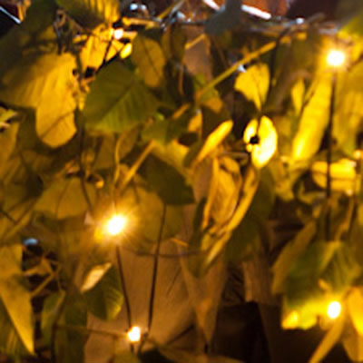indoor plant hire fairy lights
