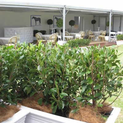 plants for corporate event hire