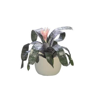 bromeliad in white mini garden bowl