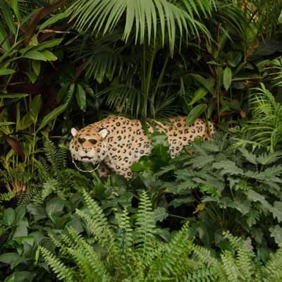 jungle theming