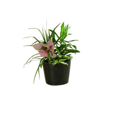 mini garden ceramic