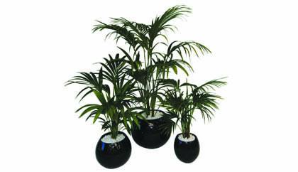 general plants