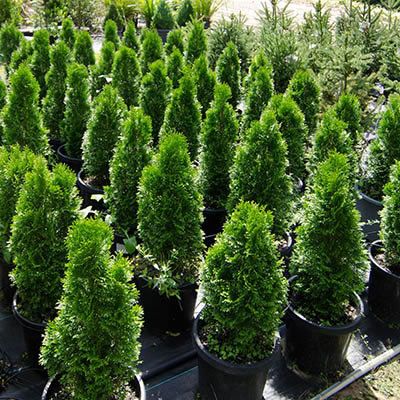 cones plant hire