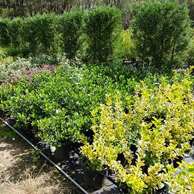 plants plant hire
