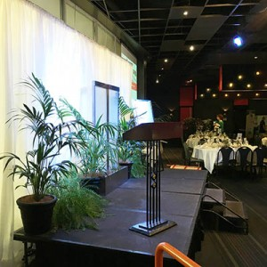 casual-canada-bay-council-rhodes-shopping-centre-water-feature-kentia-palm-fern-5-lr